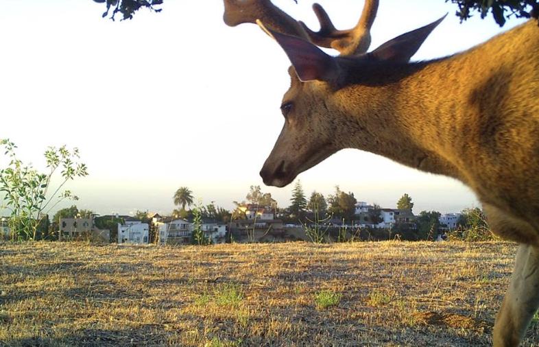 Deer Wildlife Camera.png