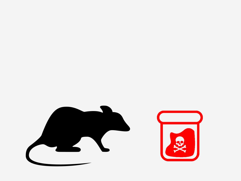 When a rat eats the poison, it doesn't die immediately.