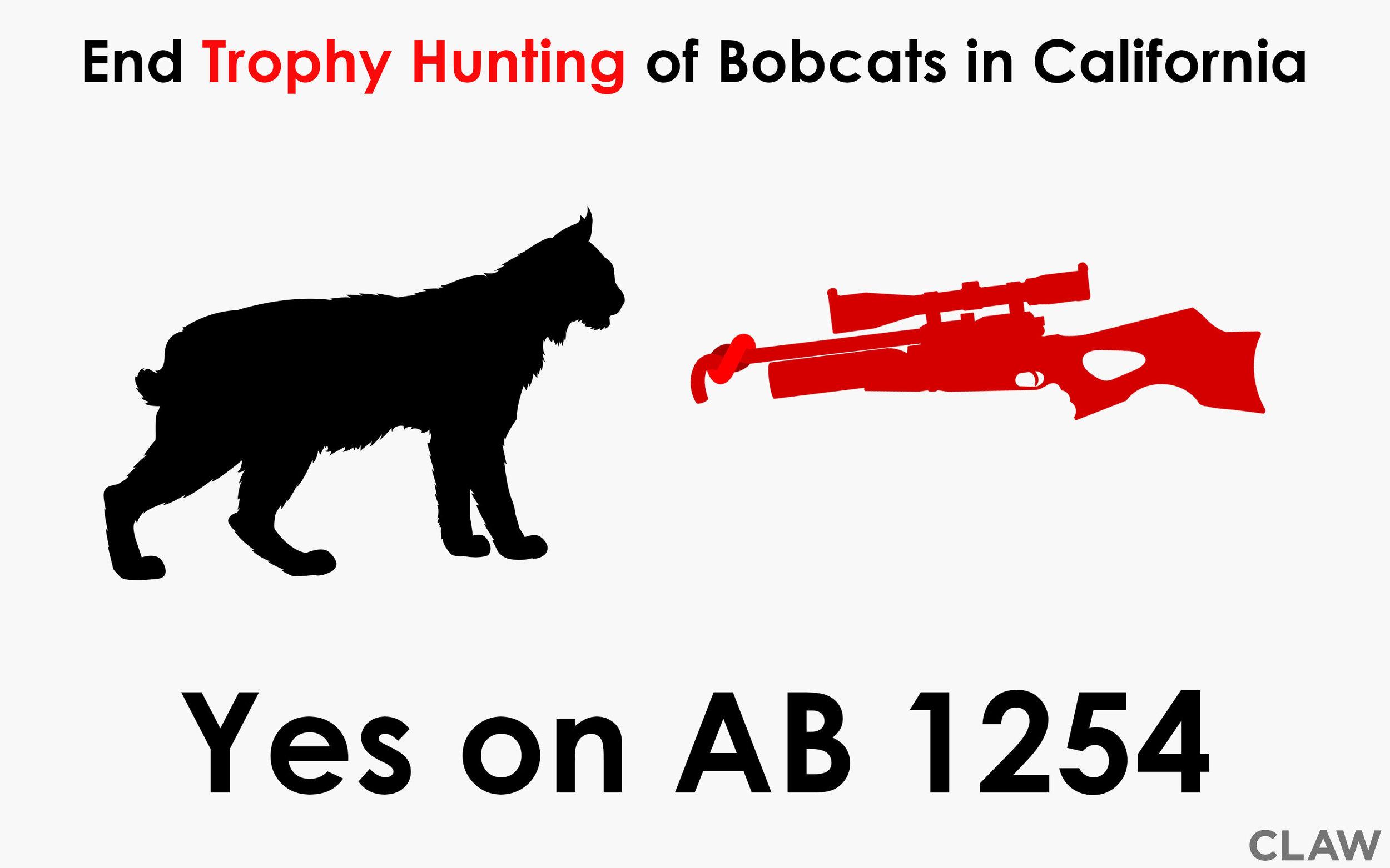 ab-1254.jpg