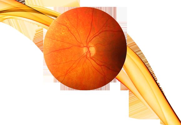 retina.png
