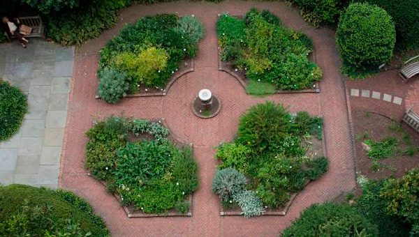 Benjamin Rush Medicinal Plant Garden. Photo courtesy of The Mutter Museum.