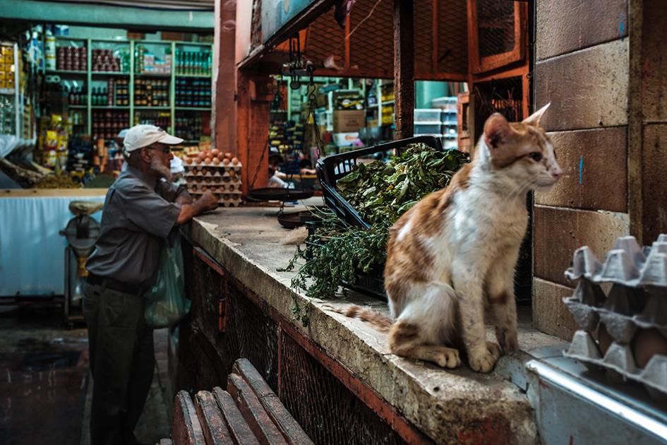 Mercado Mellah - photo Frederico van Zeller