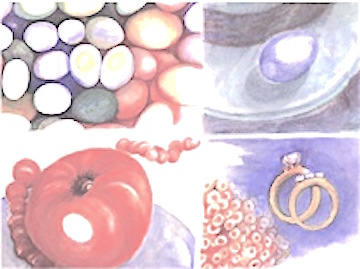 roundthings - graphic from four small watercolors 8x12 2001 - elle