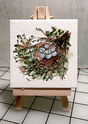 Robin Eggs in Nest