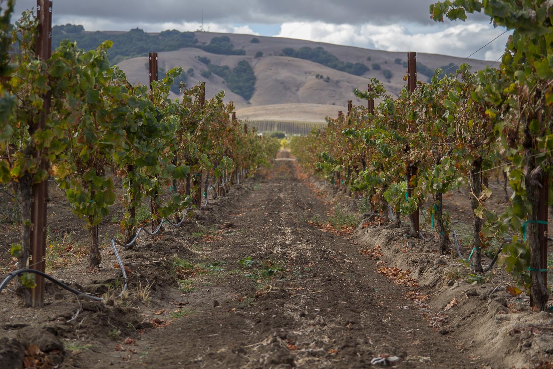 vineyard_1.jpg