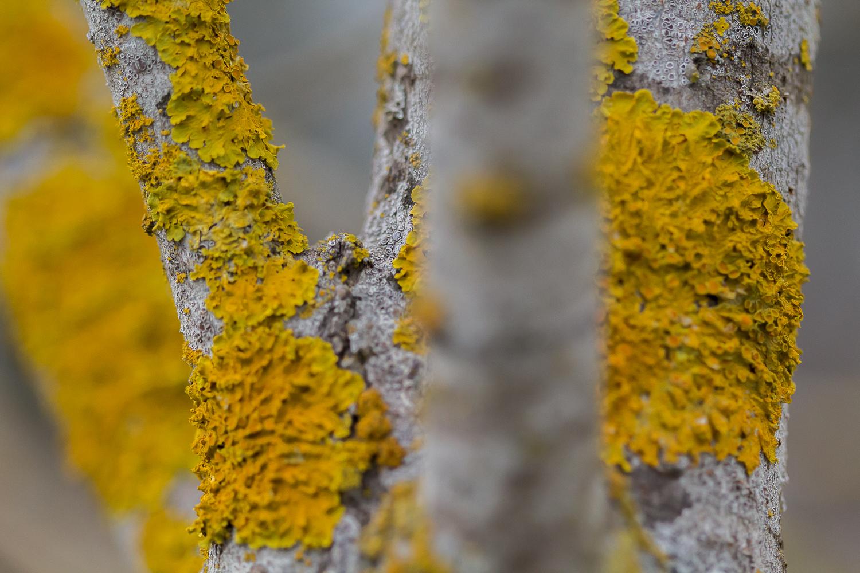 lichen_orange_laguna.jpg