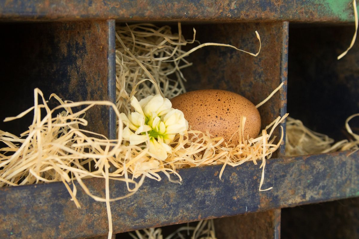 EggsInSpring.jpg