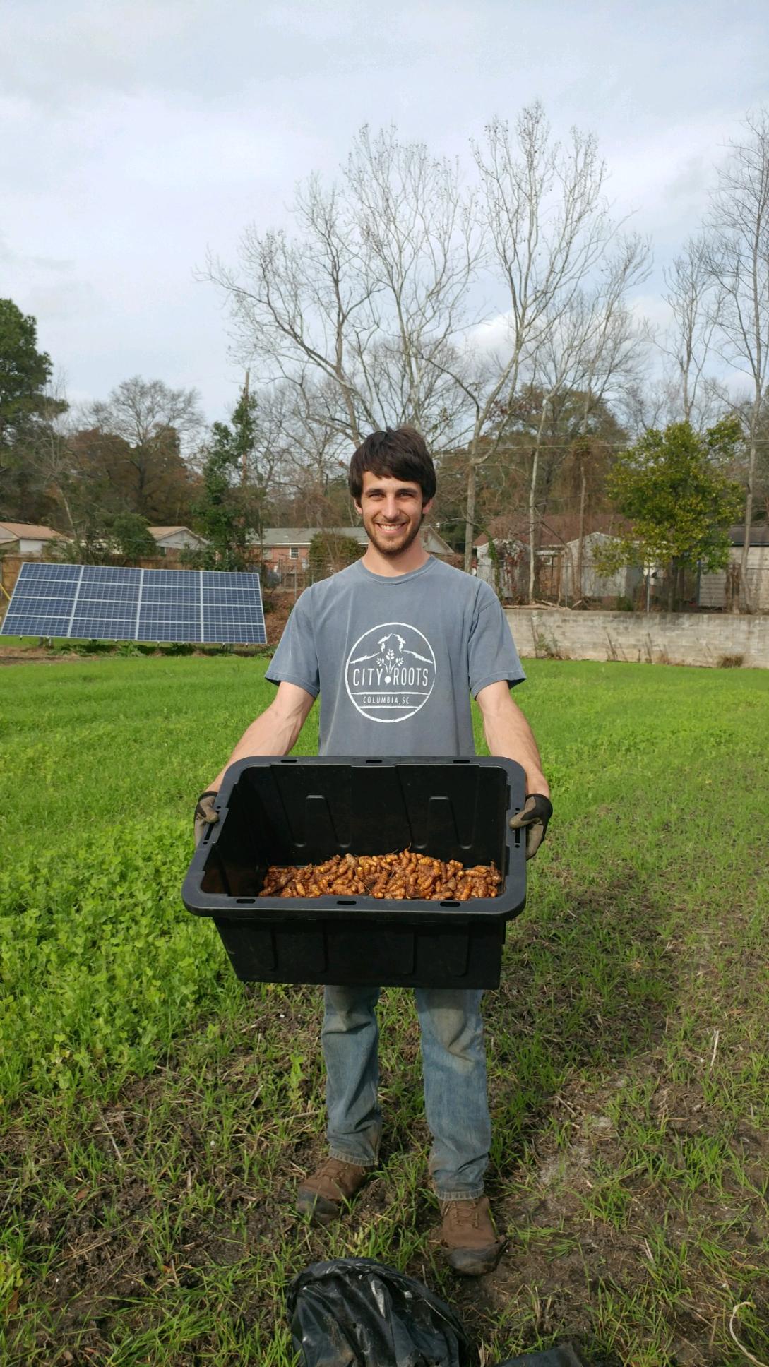 Matt with a hefty turmeric harvest