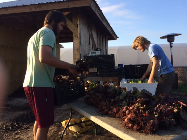 Andrew and Rigsbee Processing to the Beet