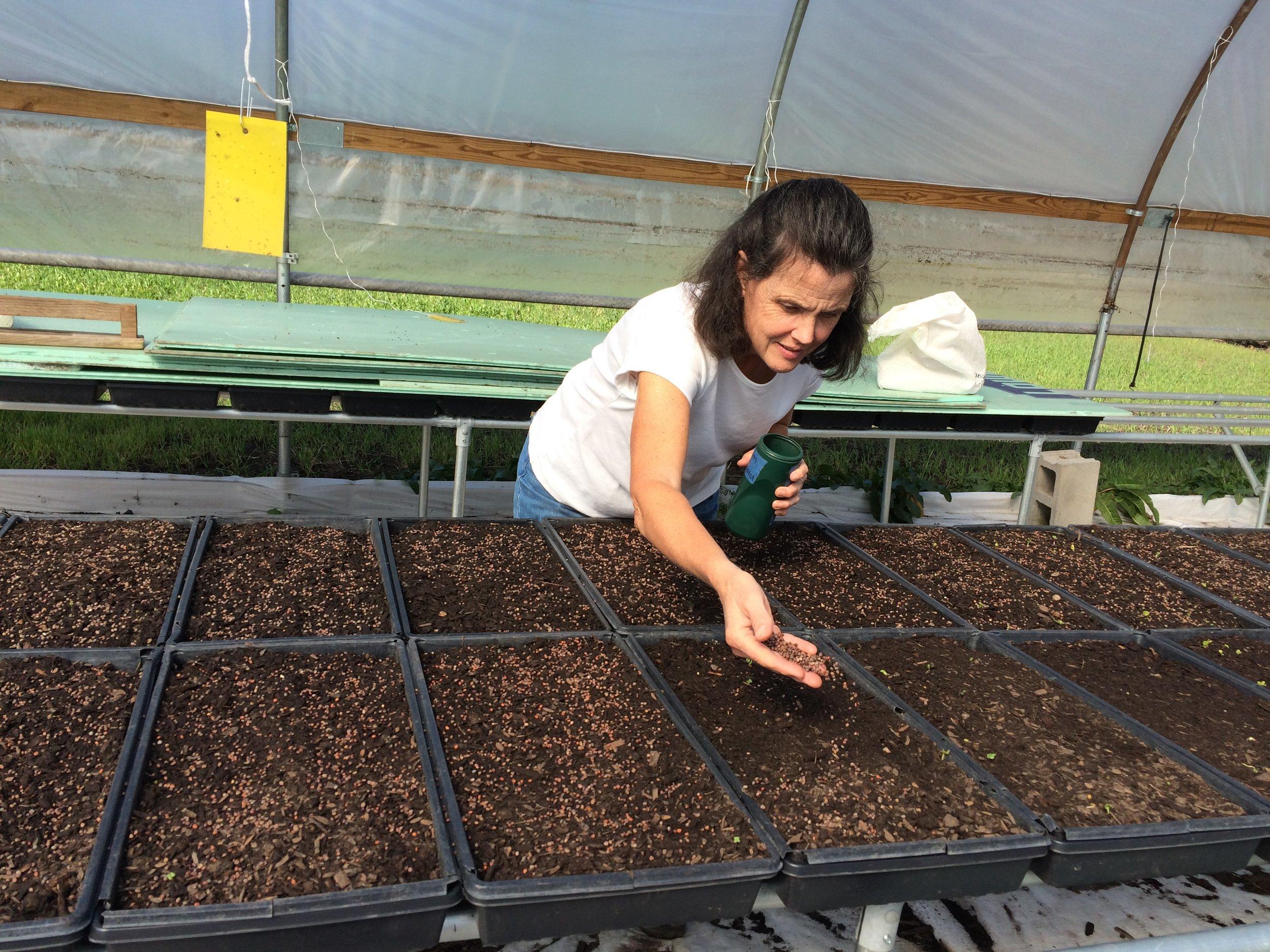 Greenhouse Manager, Beth, seeding microgreens trays: sango radish.