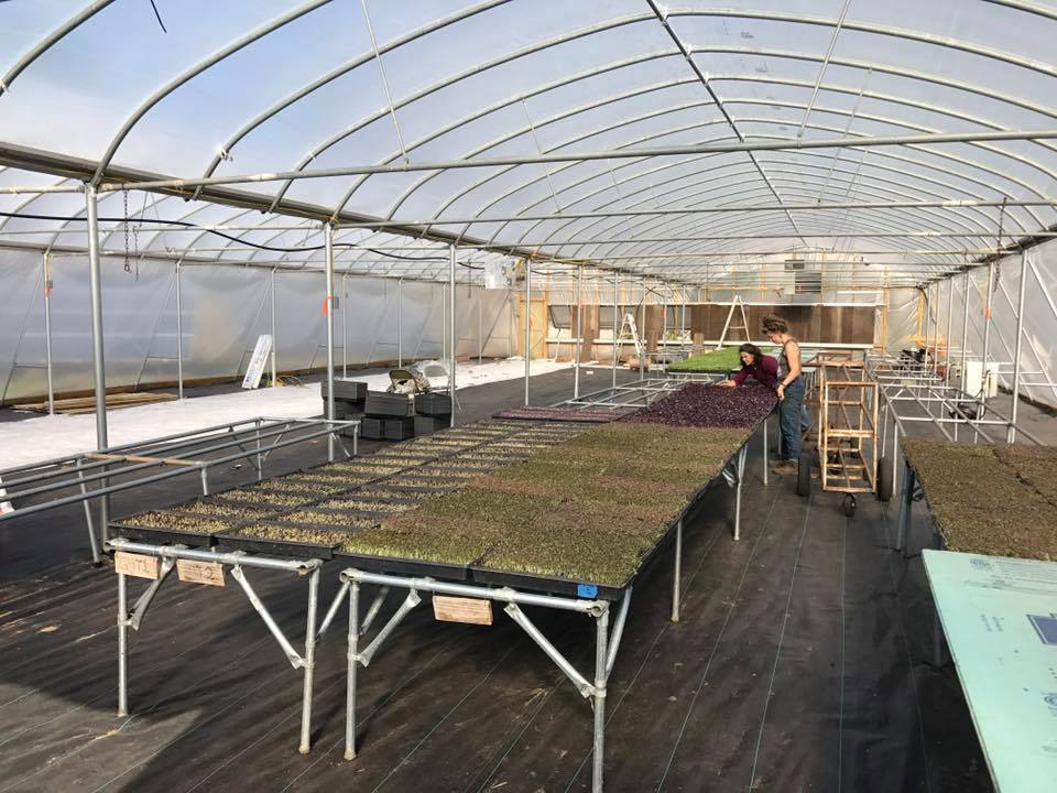 A 5,000 square foot new home for more microgreens, edible flowers, herbs and flower transplants