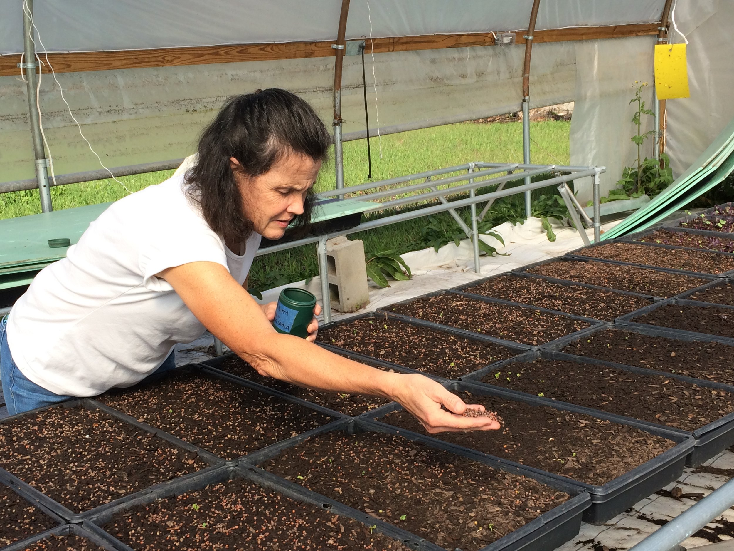 Greenhouse Manager Beth Lund seeding trays by hand.