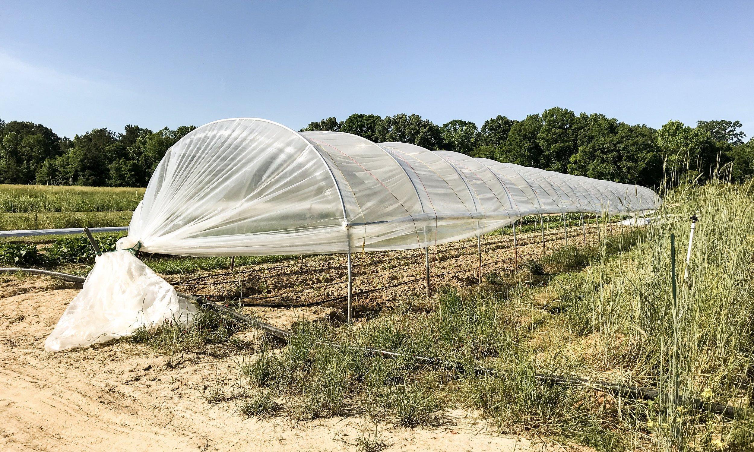 Caterpillar tunnel at Tupelo farm site