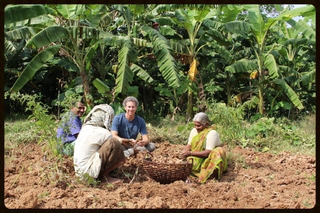 kevin casey, co owner of banyan botanicalsharvesting ginger