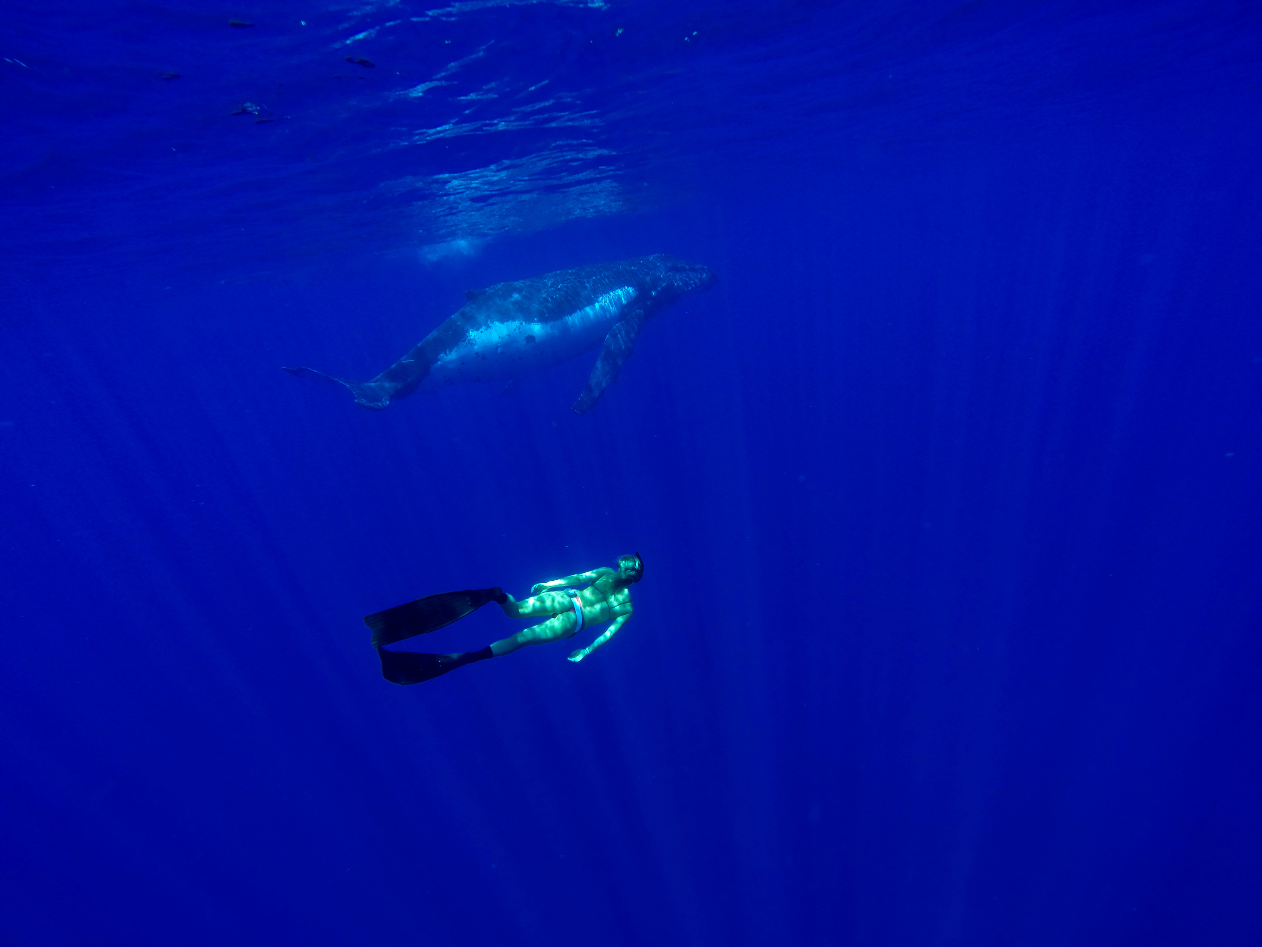 Brinkley living her dream swimming with a whale in Vava'u, Kingdom of Tonga.           Photo: Natalie Parra
