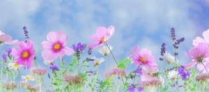 flowers and sky.jpeg