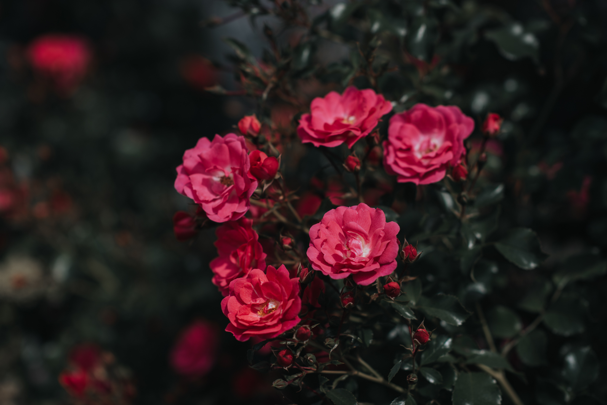 LOVELENSCAPES PHOTOGRAPHY • VISUAL POETRY • NEW ZEALAND WEDDING PHOTOGRAPHER • AUSTRALIAN WEDDING PHOTOGRAPHER • BRISBANE • MELBOURNE • SYDNEY • HOBART • TARUREKA ESTATE • ANNA CAMPBELL • 8.jpg