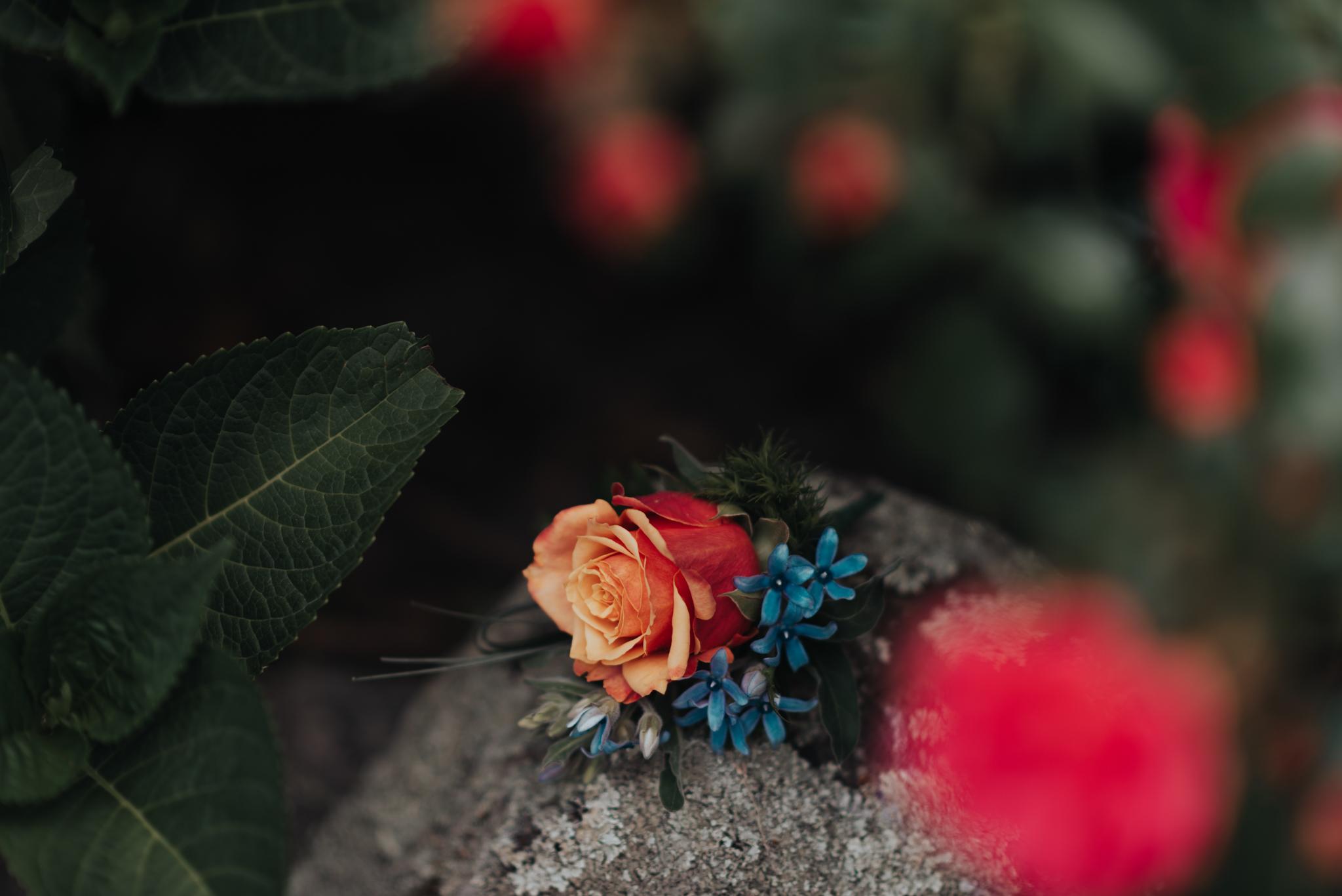 LOVELENSCAPES PHOTOGRAPHY • VISUAL POETRY • NEW ZEALAND WEDDING PHOTOGRAPHER • AUSTRALIAN WEDDING PHOTOGRAPHER • BRISBANE • MELBOURNE • SYDNEY • HOBART • TARUREKA ESTATE • ANNA CAMPBELL • 88.jpg
