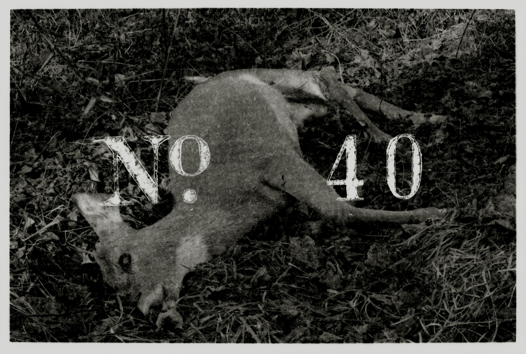 no40.jpg