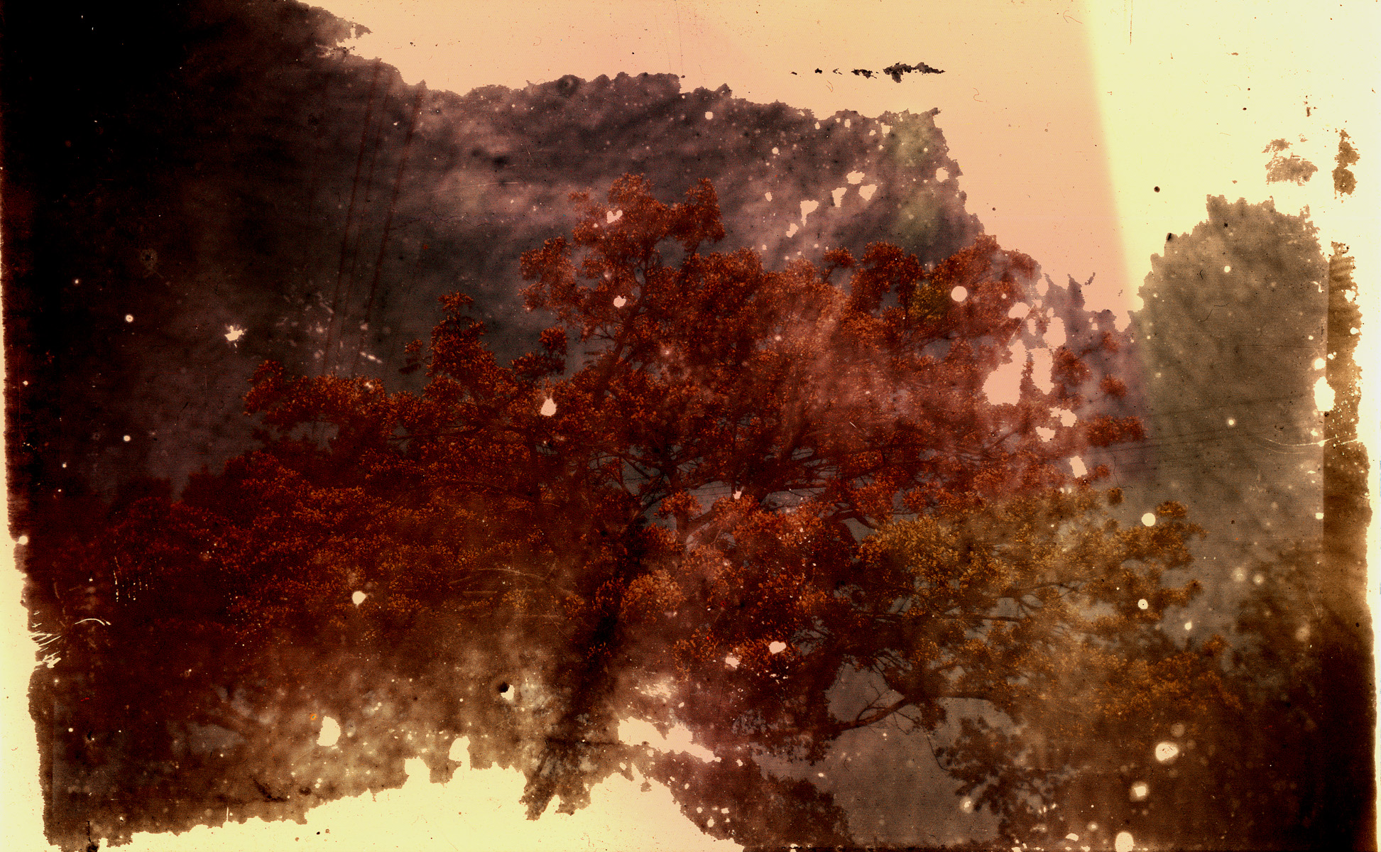 redtrees2rsz.jpg