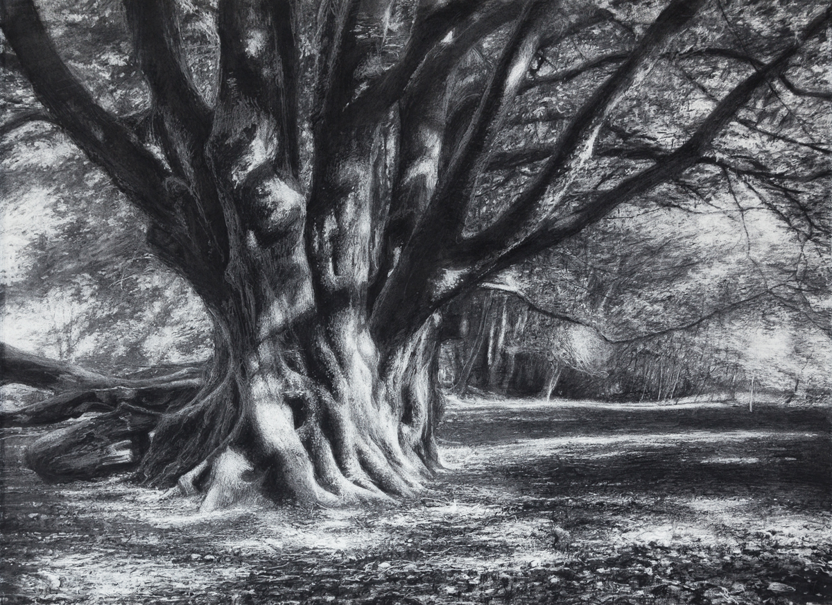 Still There , 2019 (charcoal 56 x 76 cm)