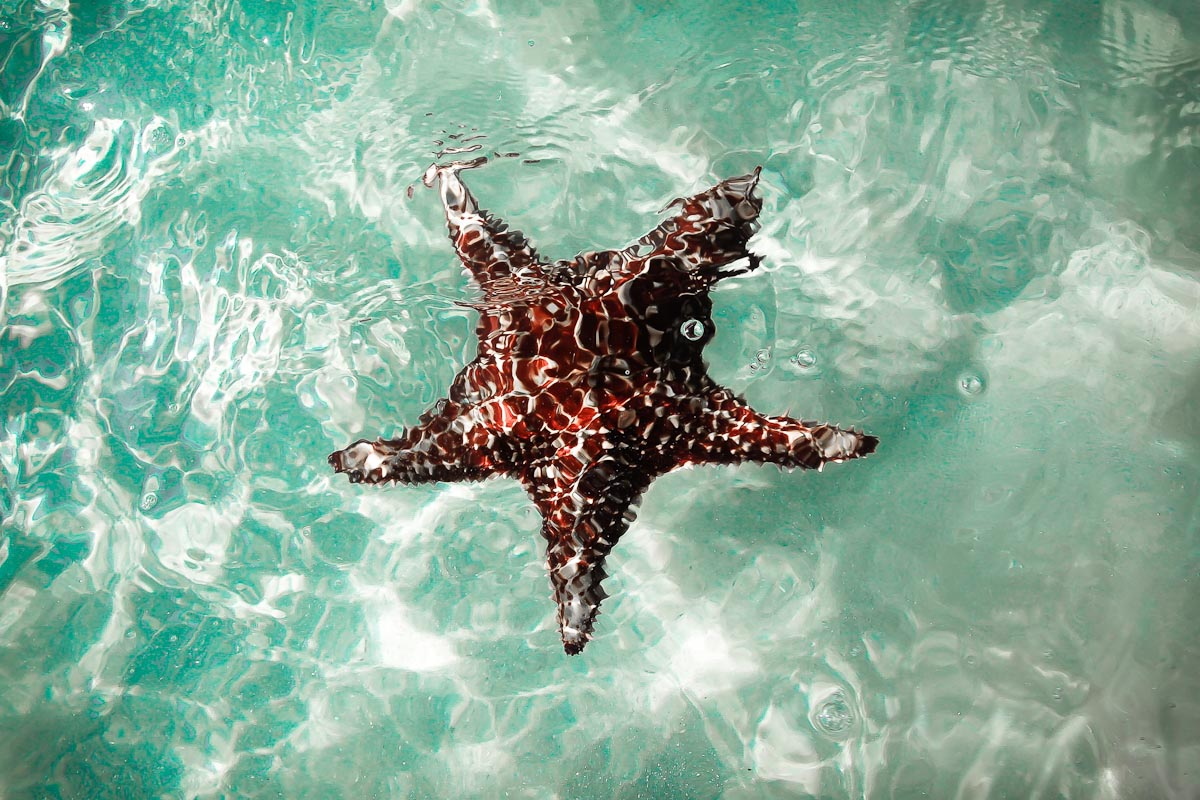 Starfish Point,Grand Cayman| Photo Credit: Marc Dorian for FED Guides