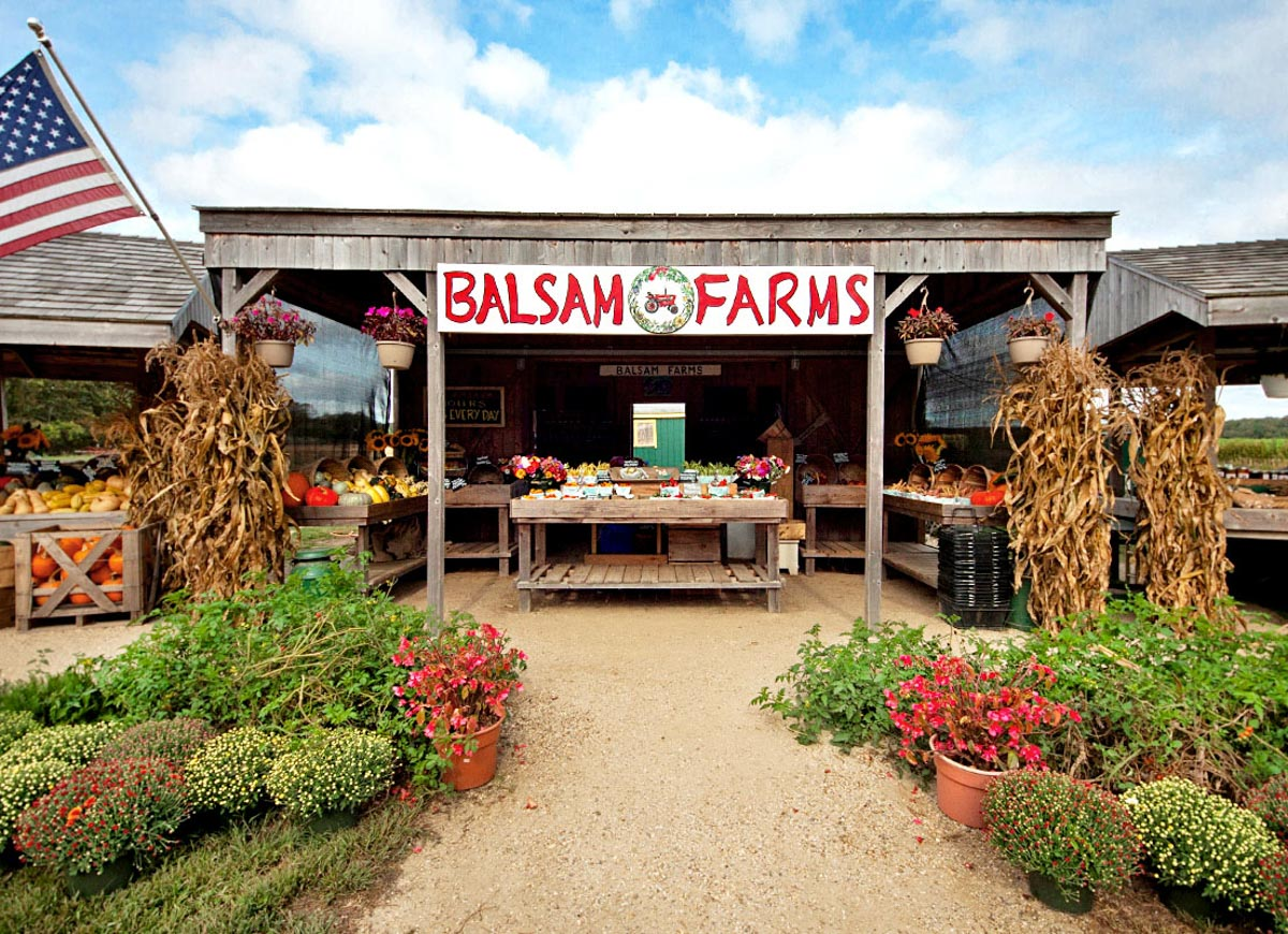 Photograph courtesy of Balsam Farms