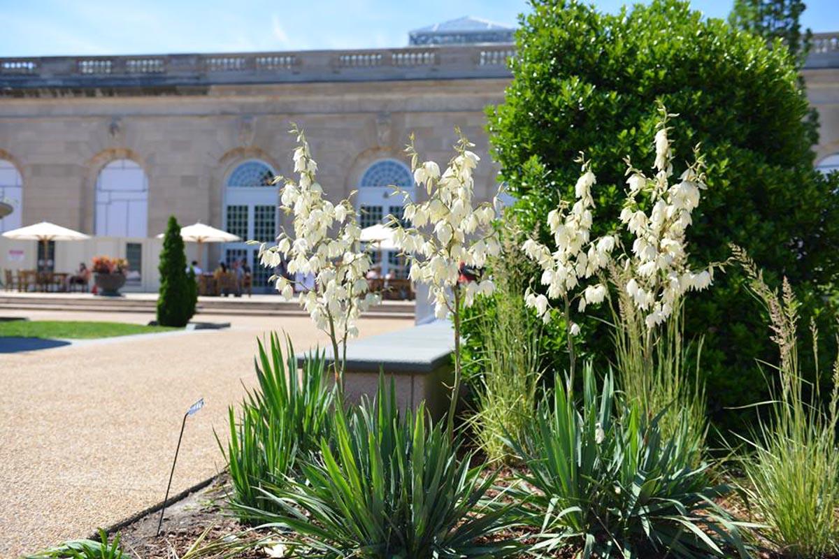 Photograph courtesy of the U.S. Botanic Garden