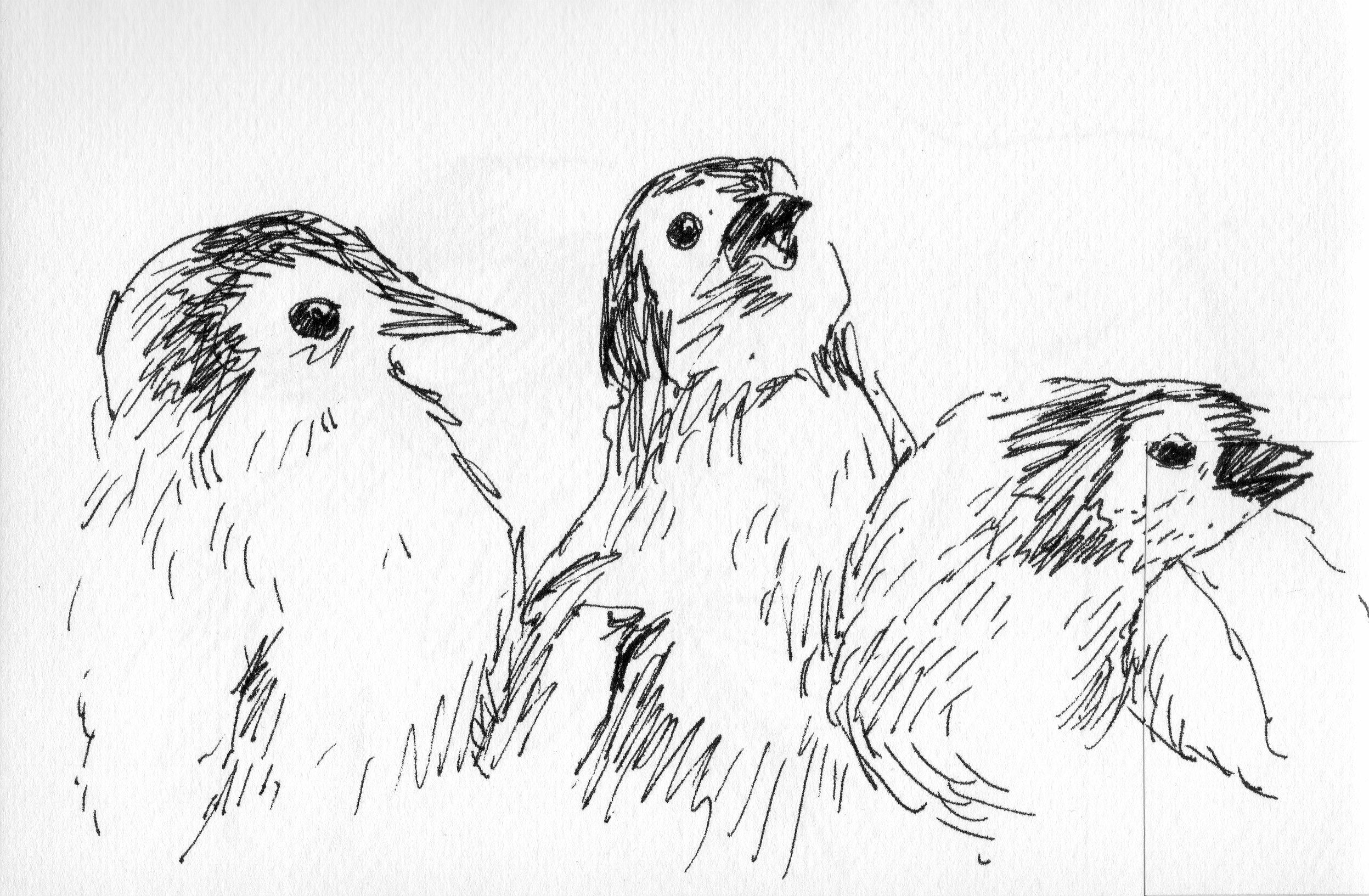 penguins_josephwallace.jpg