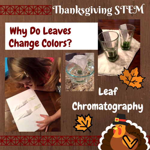 Discover why leaves change colors in the fall with facinating leaf pigment chromatography!