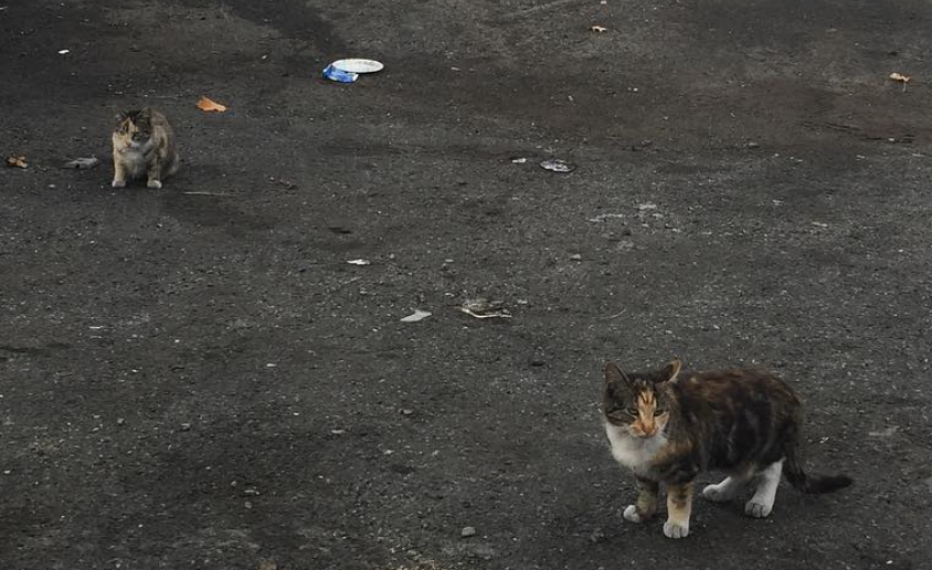 Flatcat and Bonestorm upon rescue from a junkyard in the Bronx