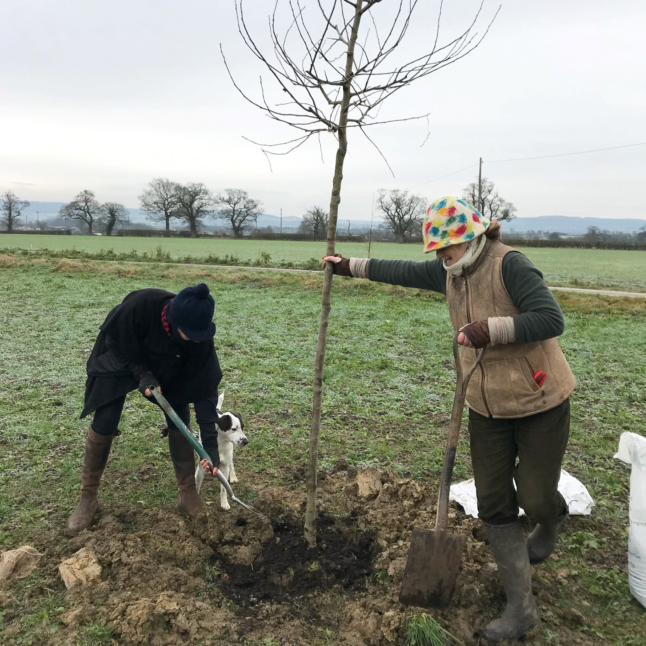Nell Gifford (left) planting an apple tree on the Frampton Estate with owner Janey Clifford