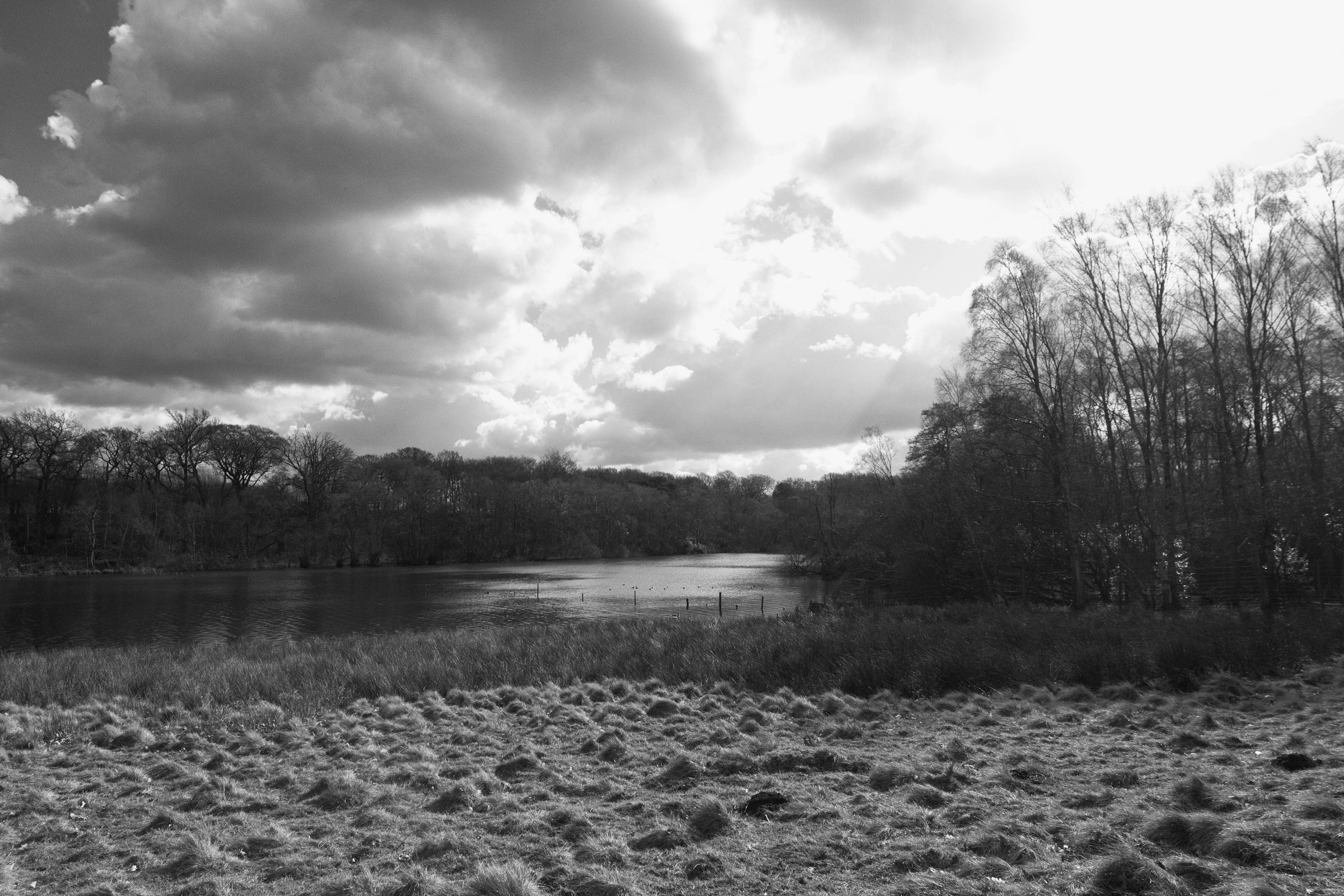 Trees by the Mere