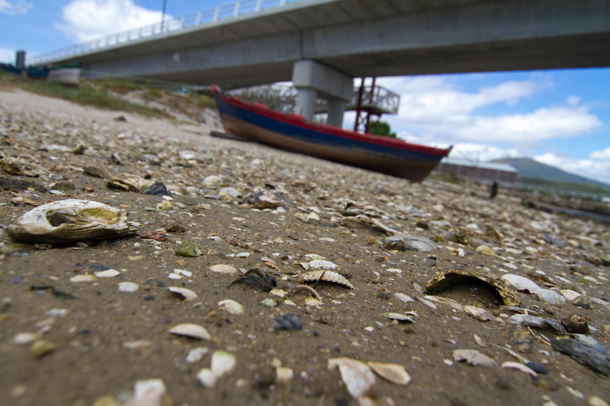 Shells Tell All