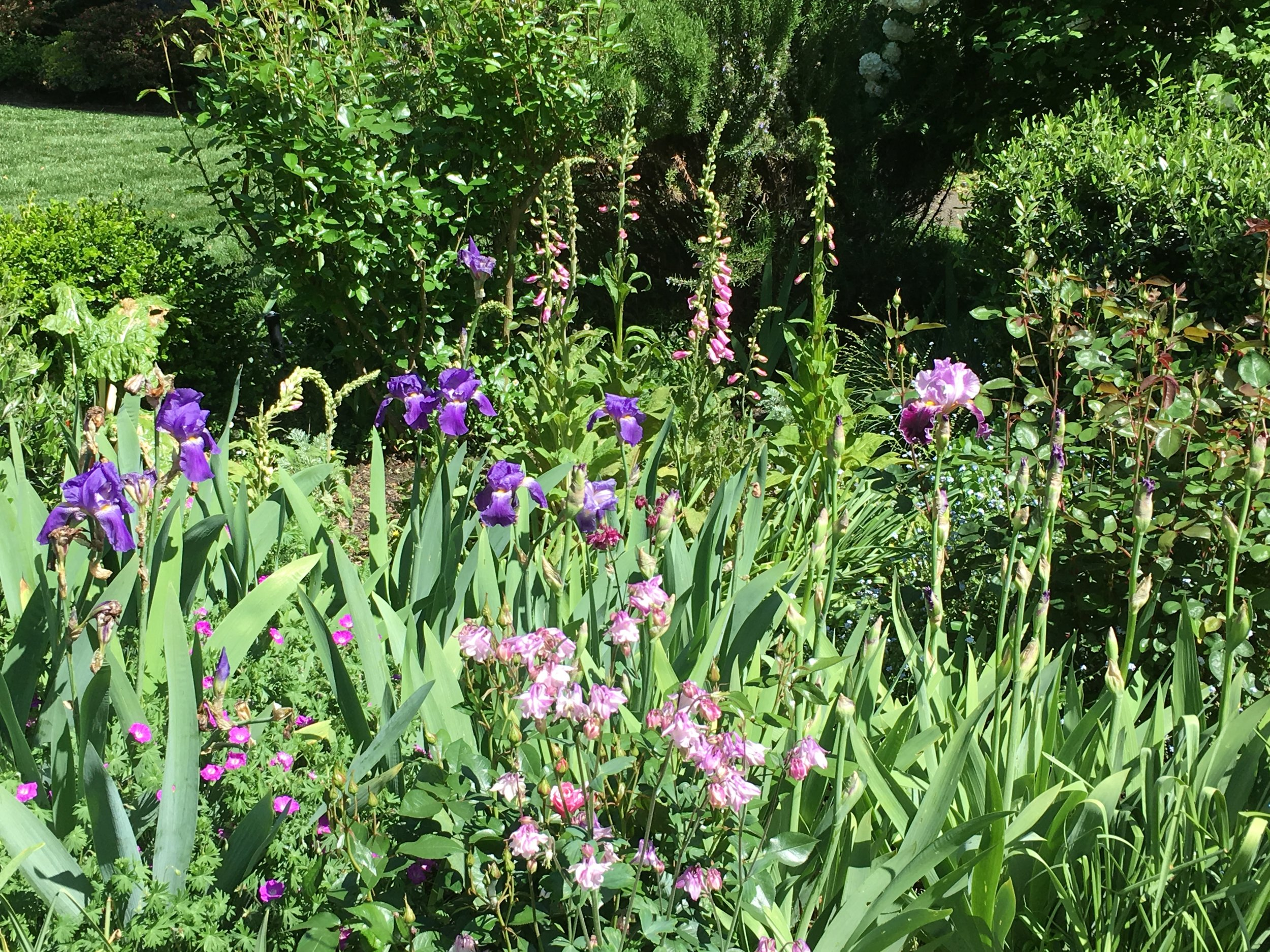 Iris Foxgloves & Columbines