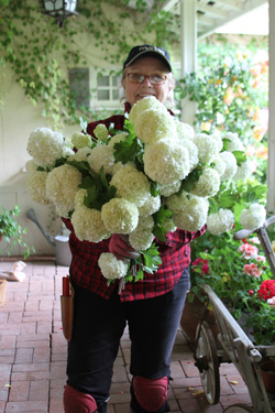 Laurie Callaway is a Garden Designer practicing in the Bay Area. As a child, she first gained her love of gardening after reading 'The Secret Garden' by Francis Hodgson Burnett. Later while working in high-tech for such companies as Amdahl, Sun and Intel she had many opportunities to travel to England and fell in love with the English gardens and countryside and dreamed of designing gardens herself someday.