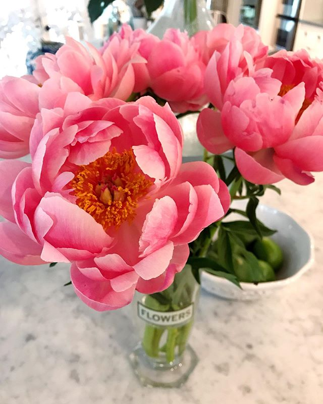How gorgeous are these peonies!! The perfect thing to brighten up this rainy day!  #peonies #peony #happythursday #flowersmakemehappy #pinkpeonies