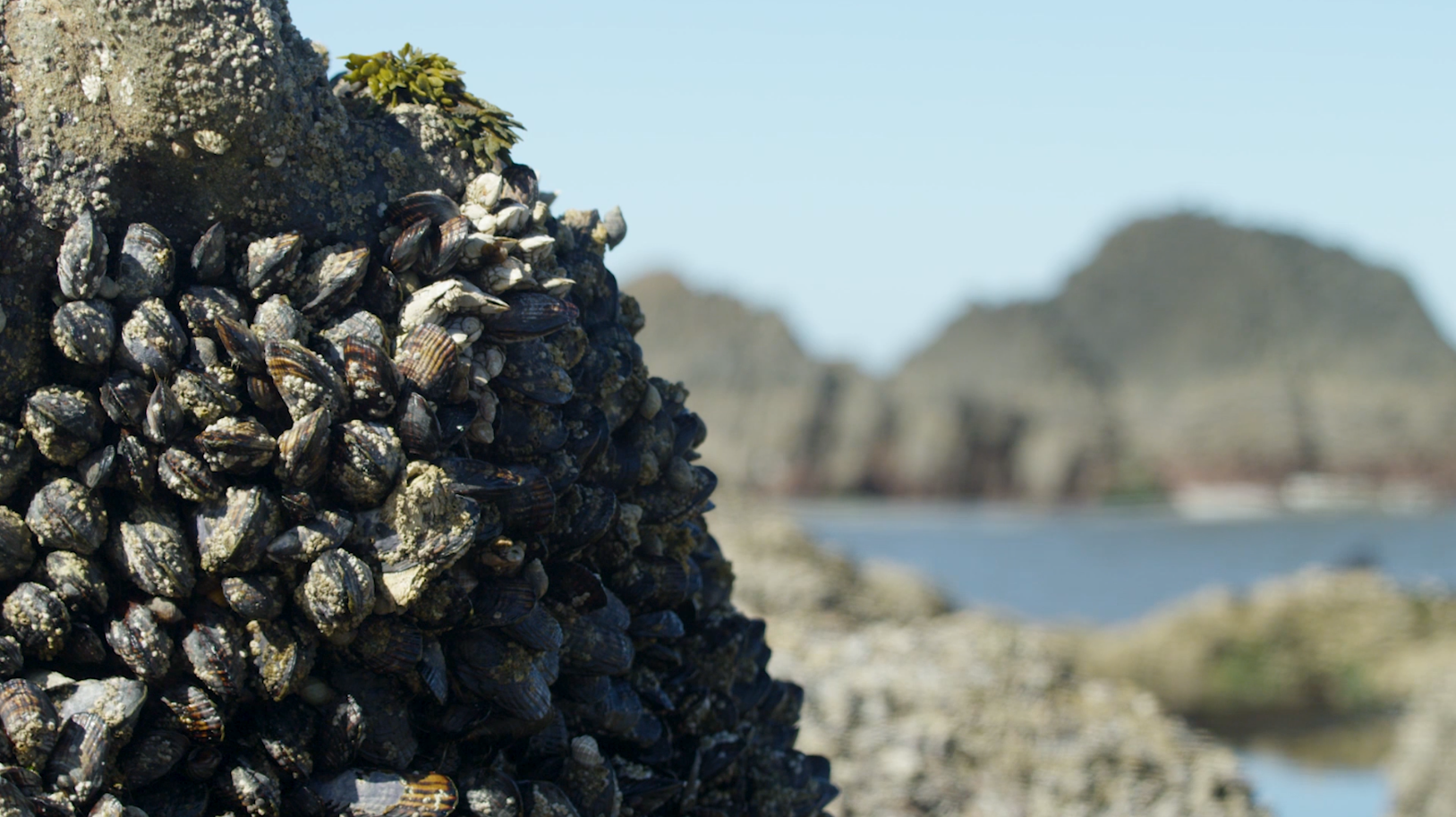 mussel-beach-2.PNG