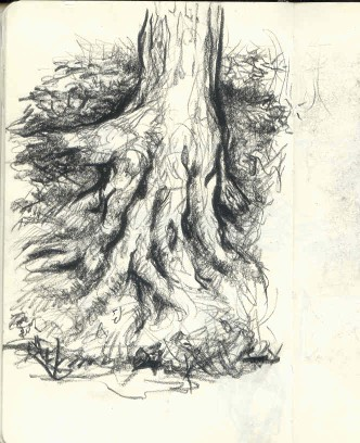 DAB sketch tree roots may 2007.jpg