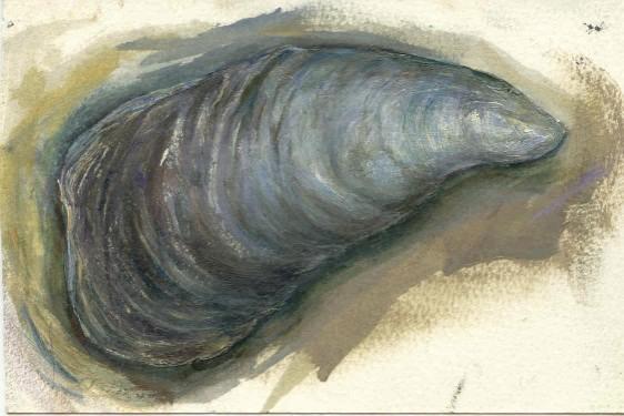 Little Babson Island, Maine 2001- Blue Mussel .jpg