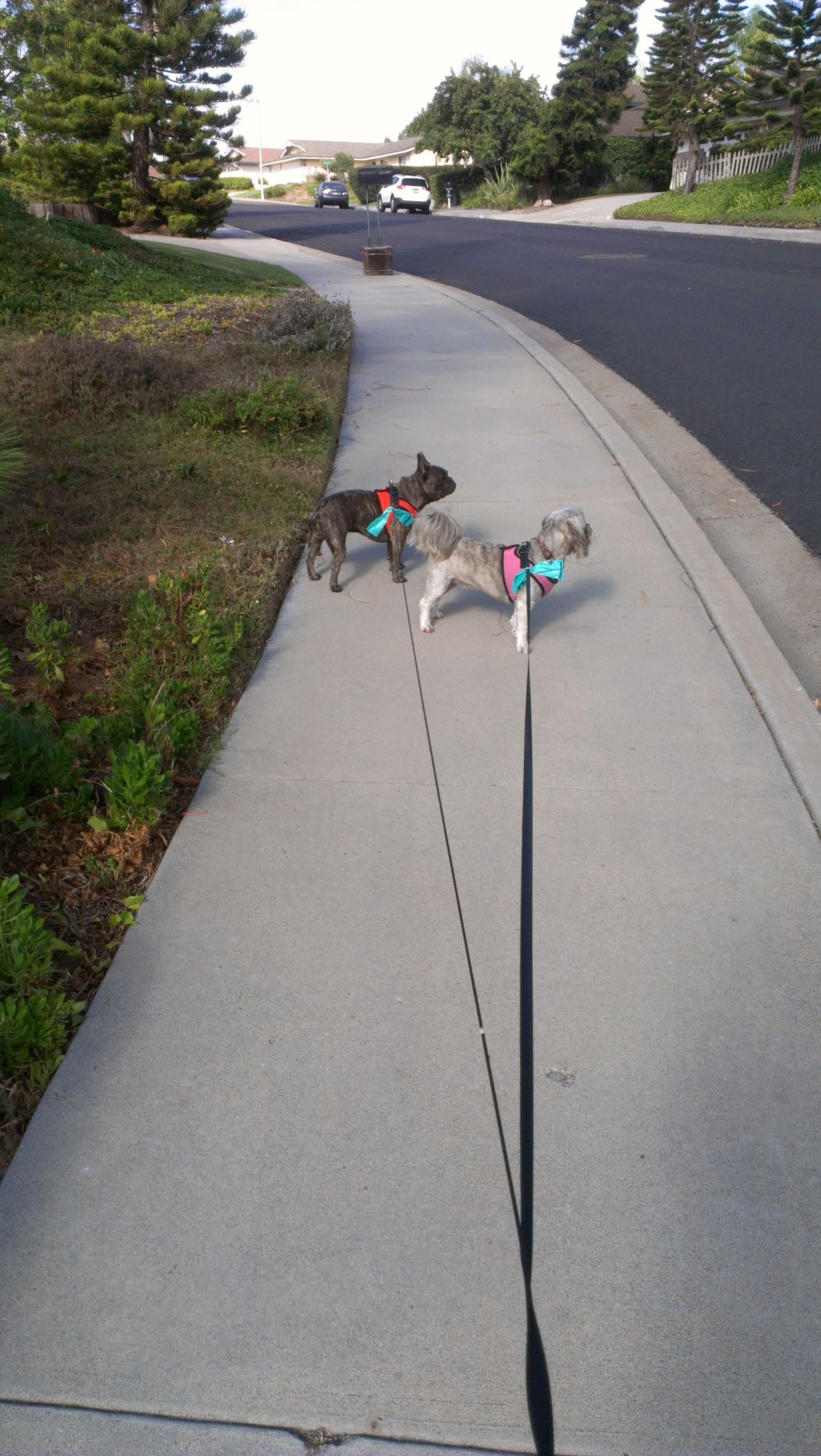 Out for a neighborhood stroll.