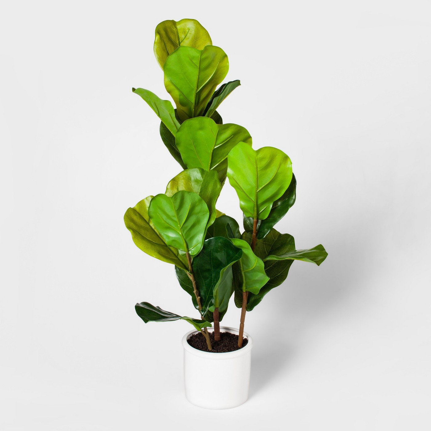 33%22 potted fiddle leaf fig tree .jpg