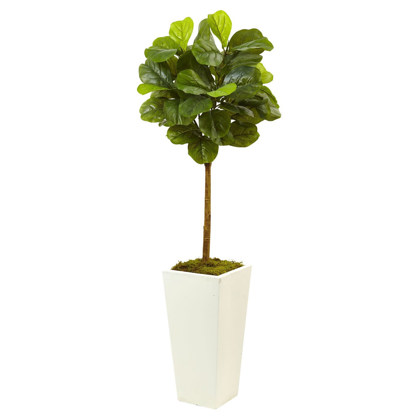 4.5 ft fiddle leaf fig tree with planter.jpg