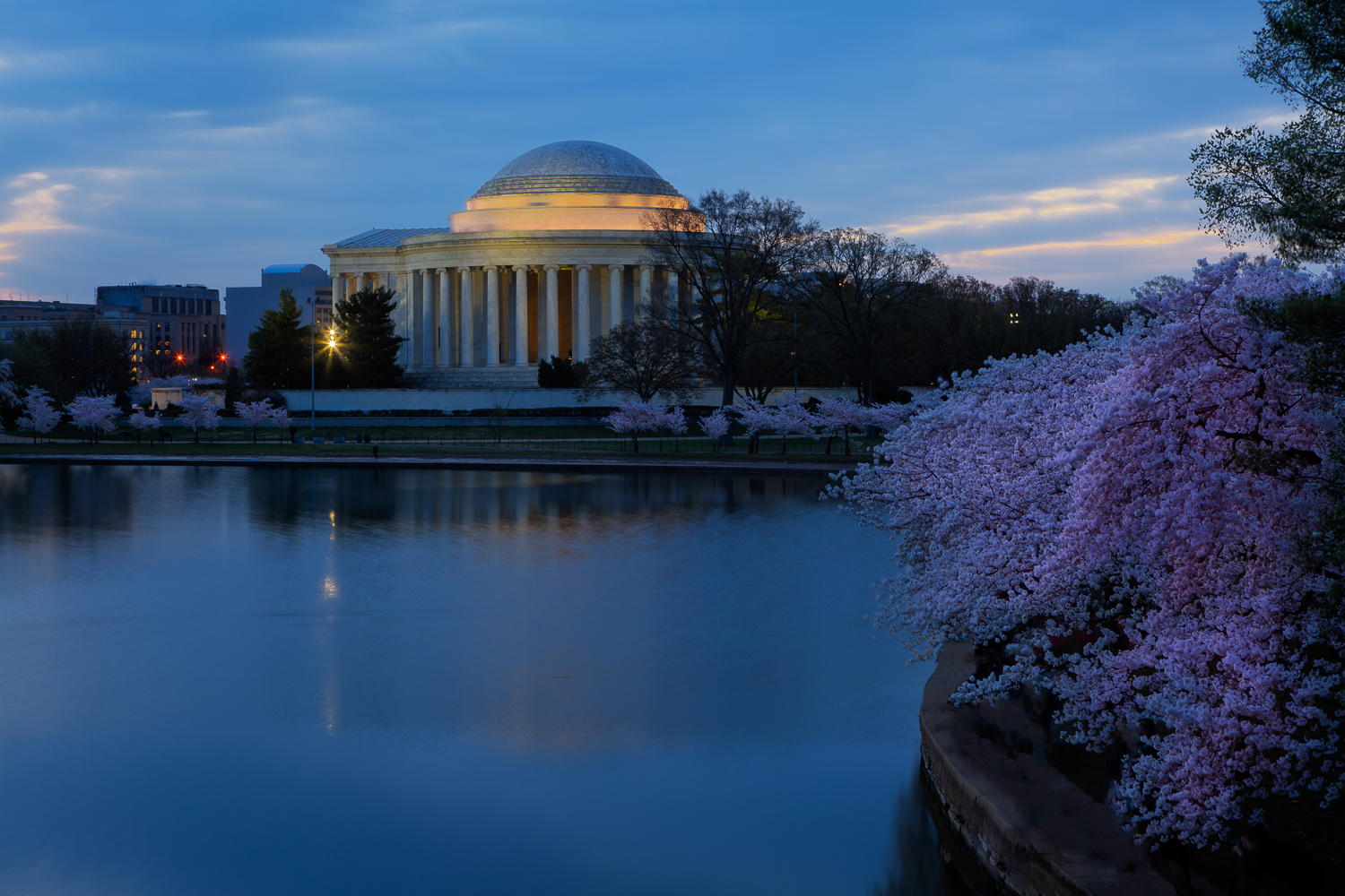 Pre-dawn Cherry Blossoms at the Jefferson Memorial