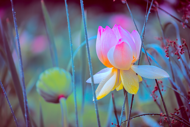 Official Spring Flower