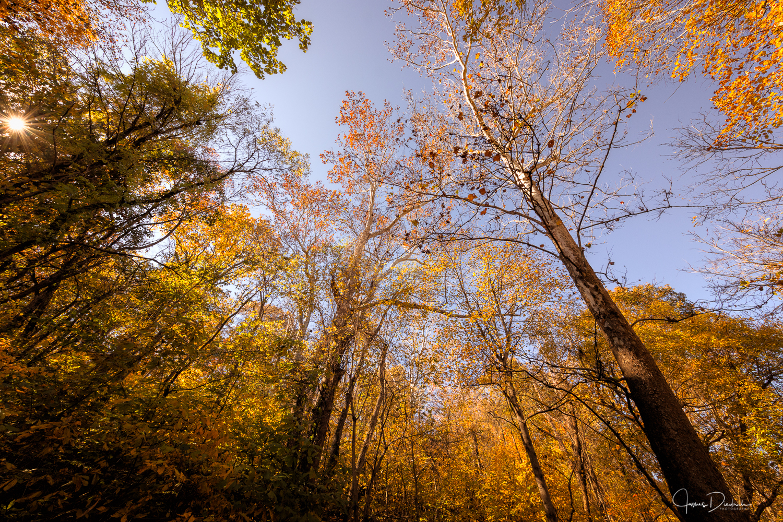 Autumn Woods, Great Falls National Park