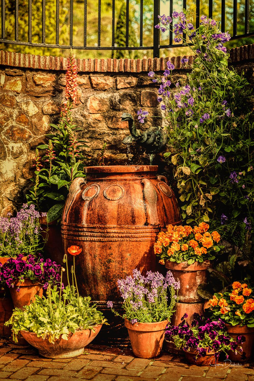 A scene in the garden.