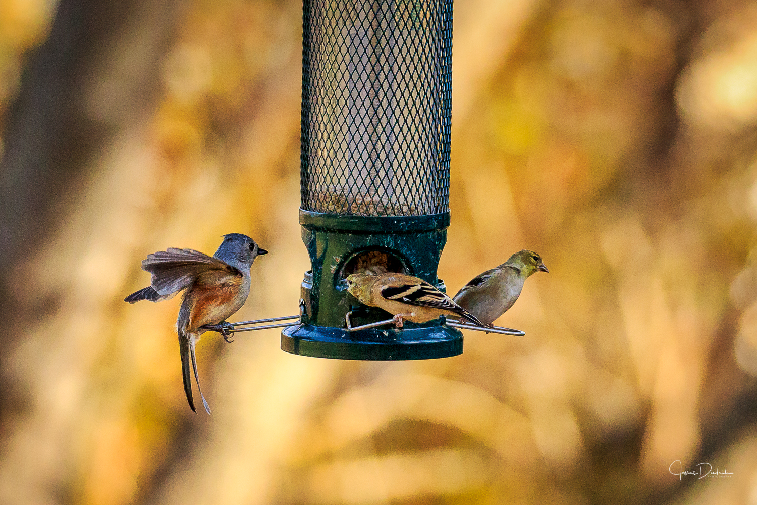Here is a group having breakfast together.