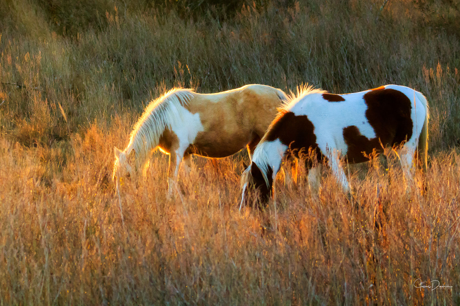 The sun was just touching upon the horses.
