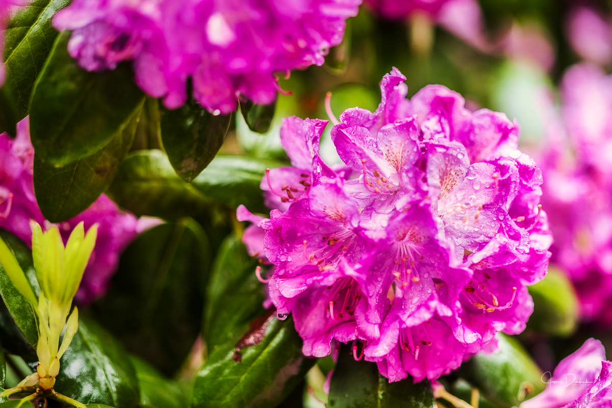 This time a little color in the rain;.